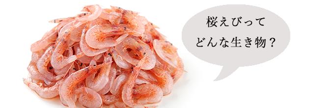 挿絵②_桜えびとオキアミ